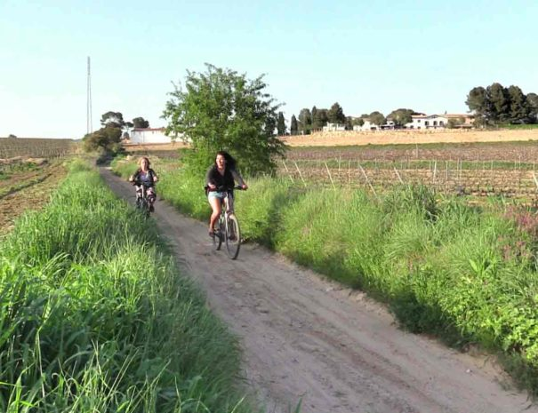 Location vélo Penedès