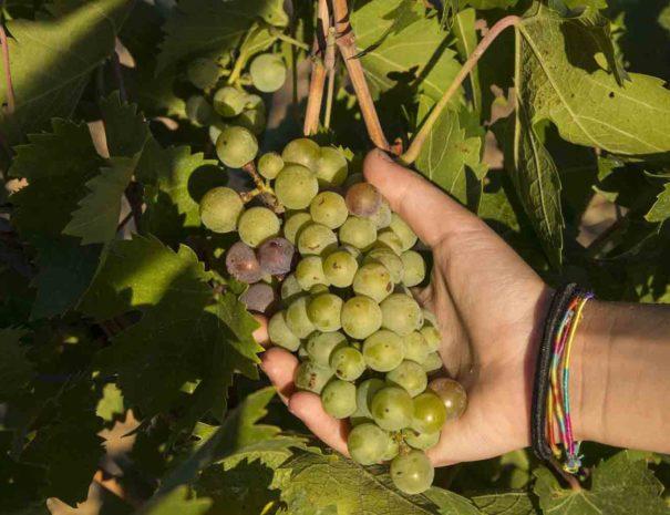 Tour à vélodans les vignobles du Penedès