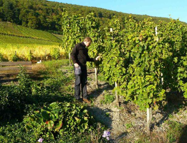 Activités vignes Penedès