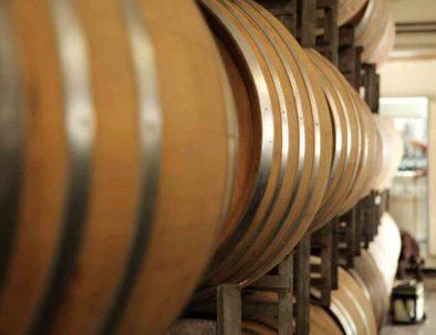 Visite cave à vin Penedès