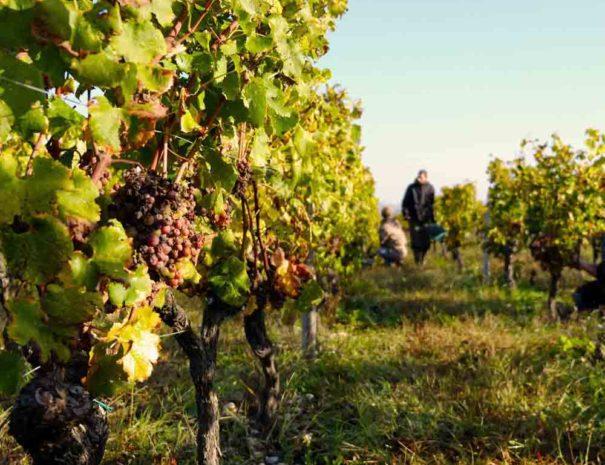 Tour guidé Penedès vin