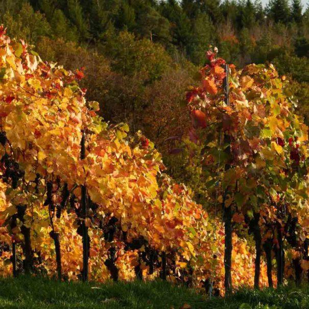 Tour privé vignoble Penedès