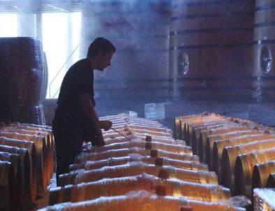 Winegrower Penedès