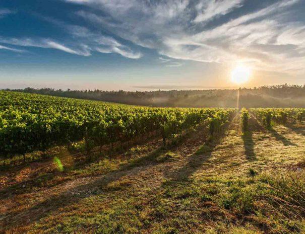 Vignoble du Penedès tour privé