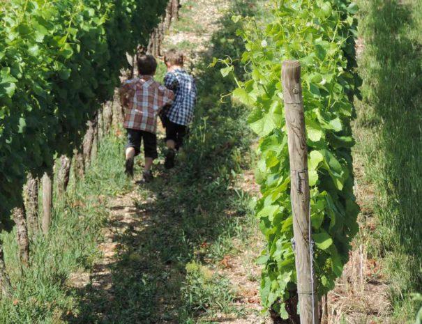 Visite vigne Penedès