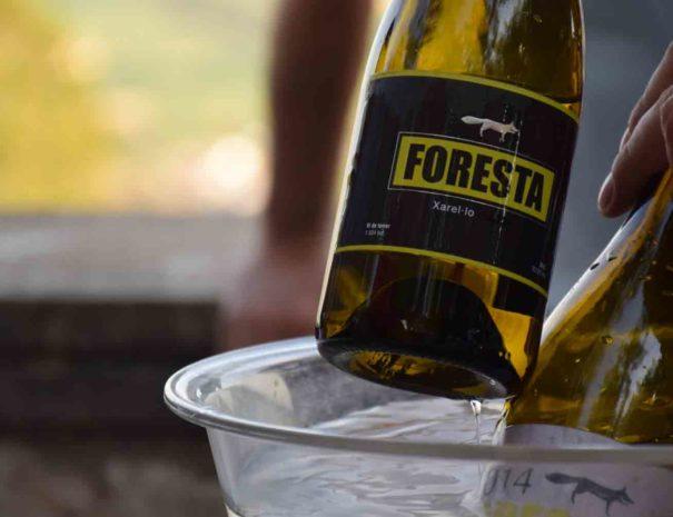 Cata vins de Foresta