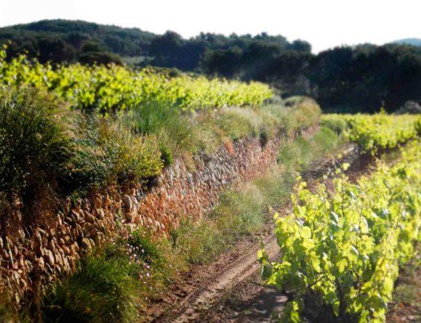 Visita vins de Foresta