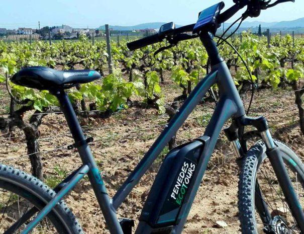 Brunch et vélo Penedès
