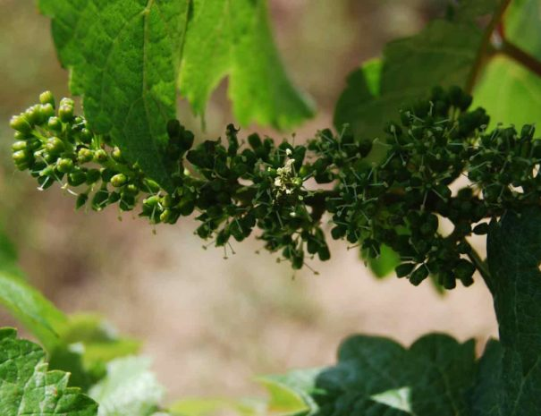 Wine Tourism Barcelona Catalonia