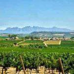 montserrat viticulteur tour
