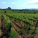 vignoble barcelone