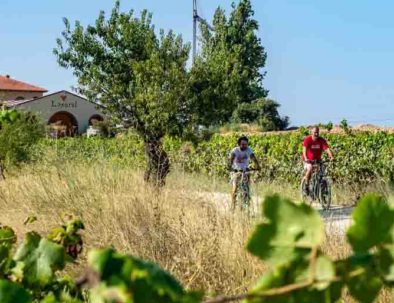 guided tour winery penedes